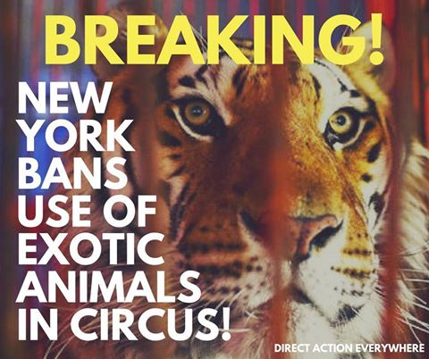 nyc ban on wild animals in circuses