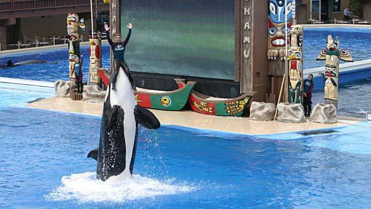 kasatka orca.jpg