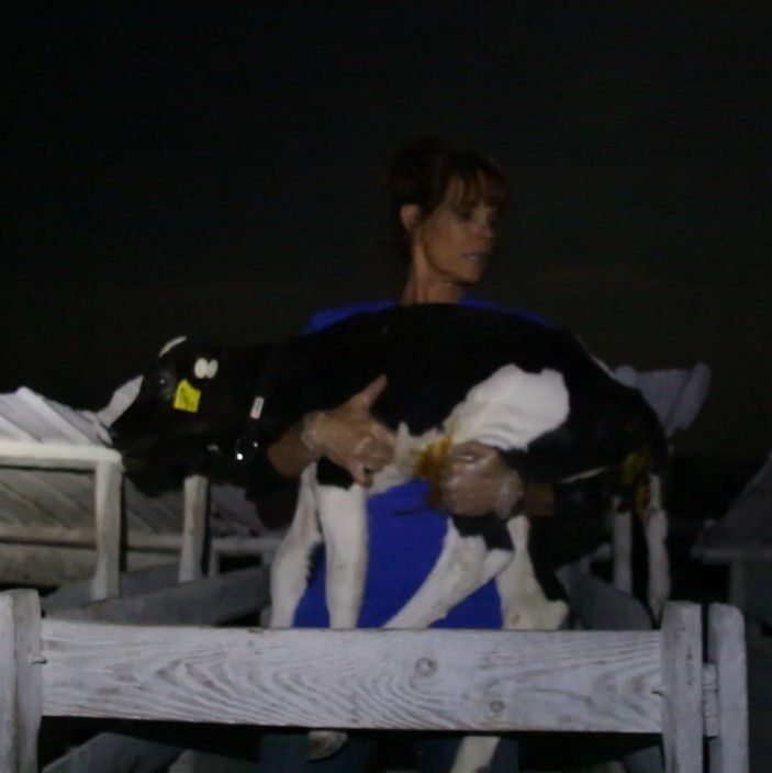 Former Baywatch star Alexandra Paul lifts Roselynn from her hutch and into a new life.