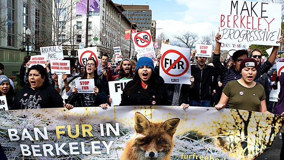 Berkeley Council Votes To Ban Fur Clothing Sales - April 6, 2017CBS