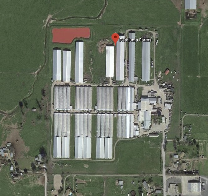 "DxE estimates there are one-to-two million hens at this ""small family farm."""