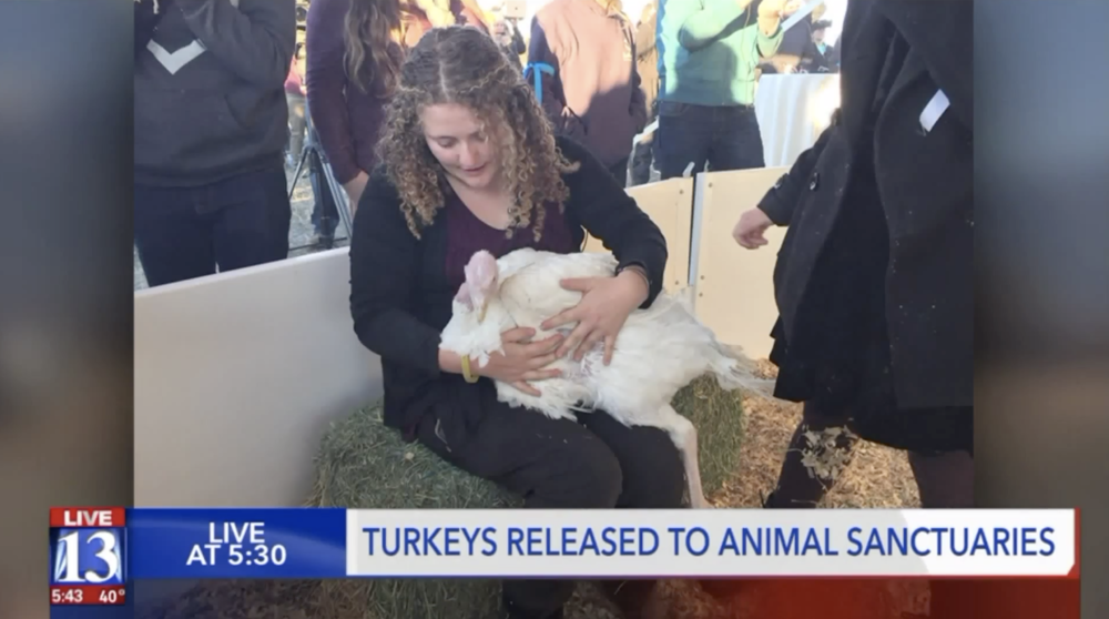 Animal rights activists, facing 60 years in prison, release turkeys to local sanctuaries - November 19, 2018Fox 13, Salt Lake City