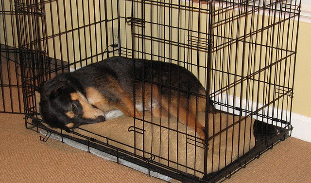 Crate-Training-Blog-Dog-in-Wire-Crate-mara.jpg