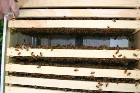 Whole Beehive.JPG