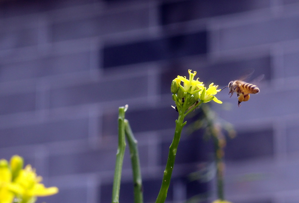 A bee doing it's thing for the world.