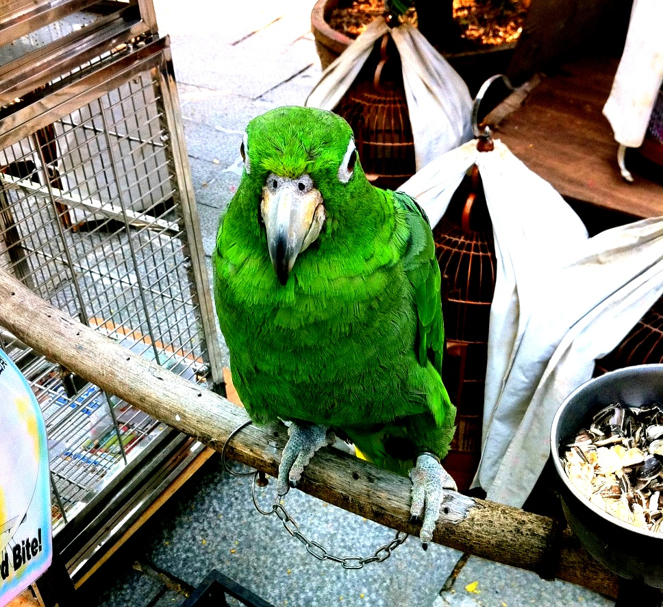This is NOT a Norwegian Blue Parrot!