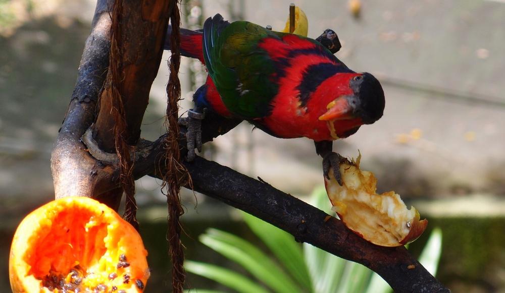 The bird version of a drive thru restaurant
