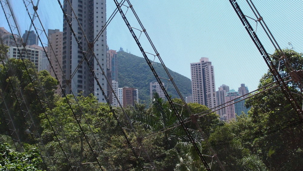 A view of the Peak from the Aviary