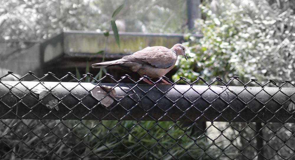Wild birds are in abundance