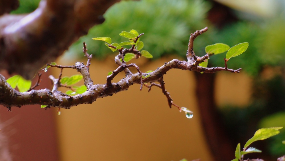 Wet bonsai