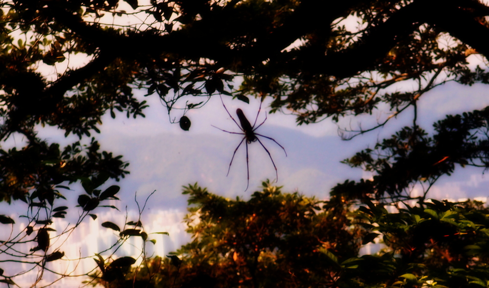 Say hello to my little spider.................