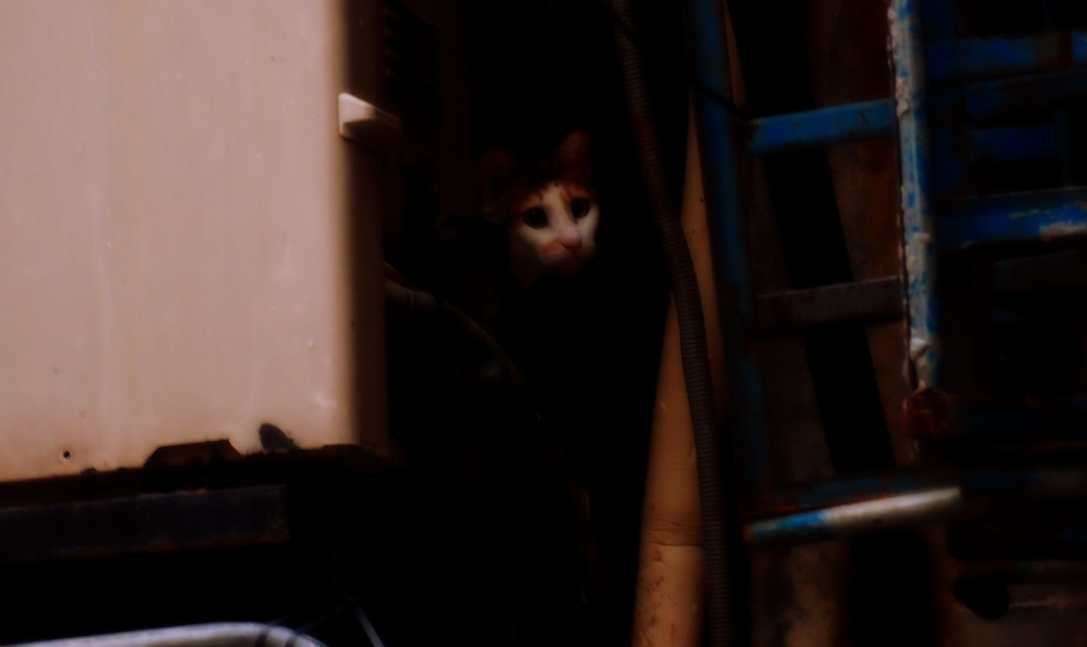 A dodgy cat