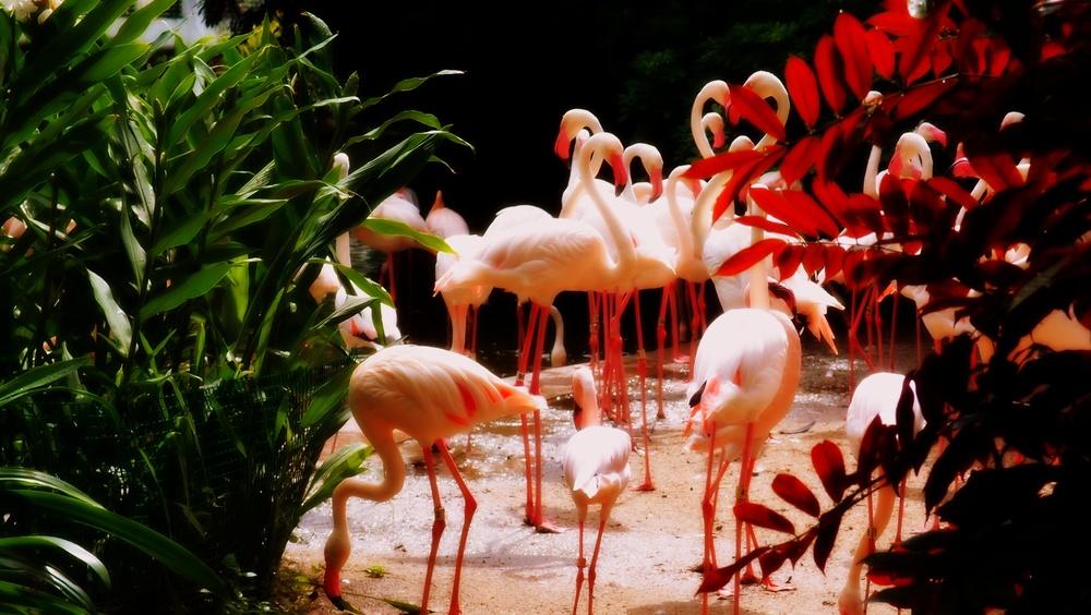 Nice flamingo's