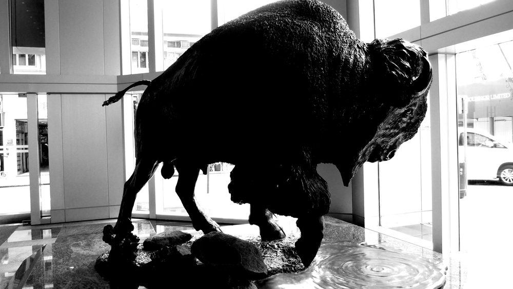 "A bison statue in the AIA Building in North Point on Oil Street, anatomically correct, ""tackle"" and all....."