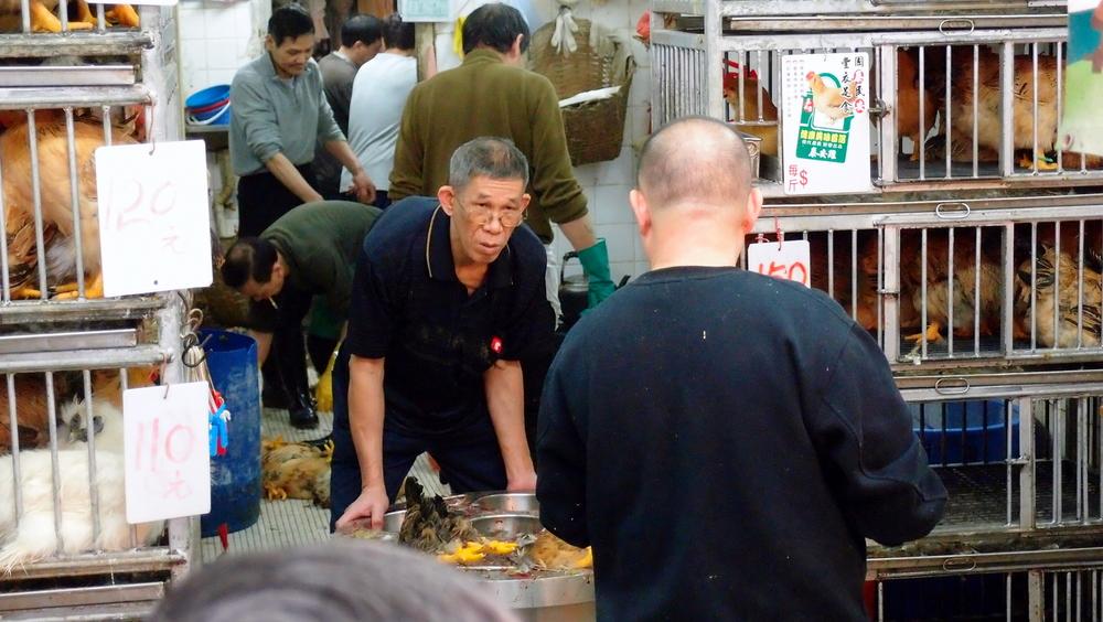 Chicken traders at Wanchai wet market, pretty gruesome stuff