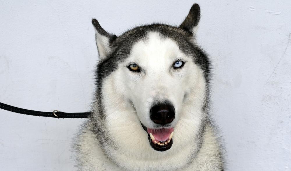 A very, very creepy devil dog / hound of hell!