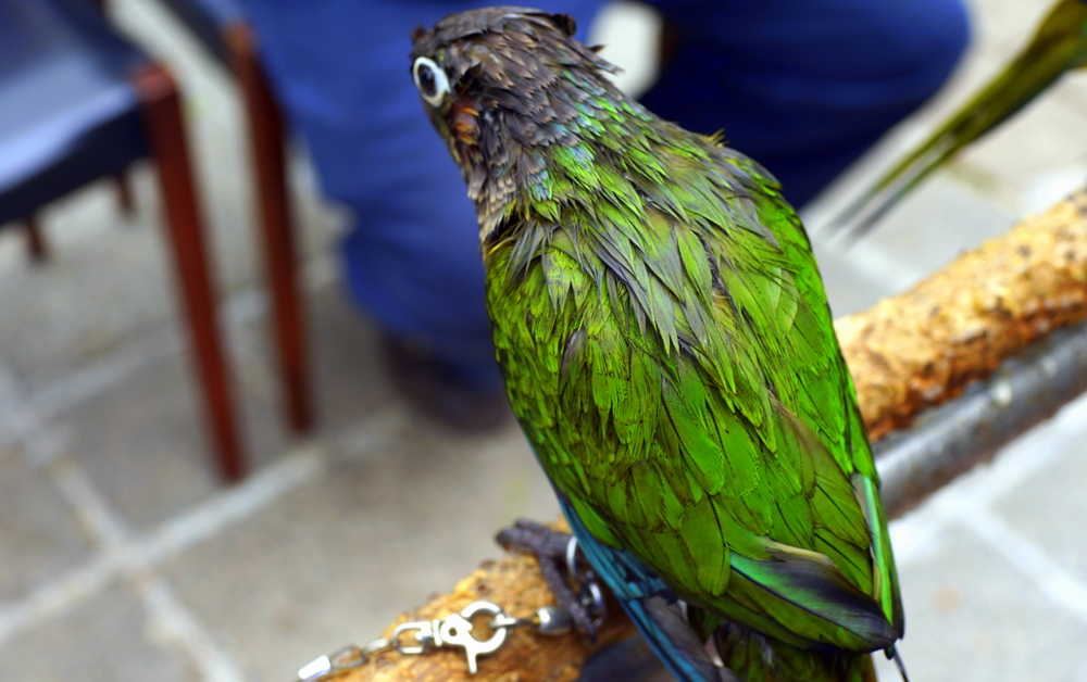 The mad birds at the Bird Market