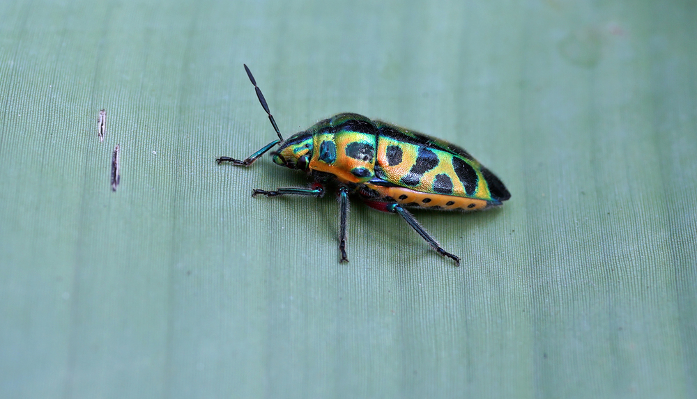 I have never seen a bug like this before.... wow.  Go here for my small collection of bug images