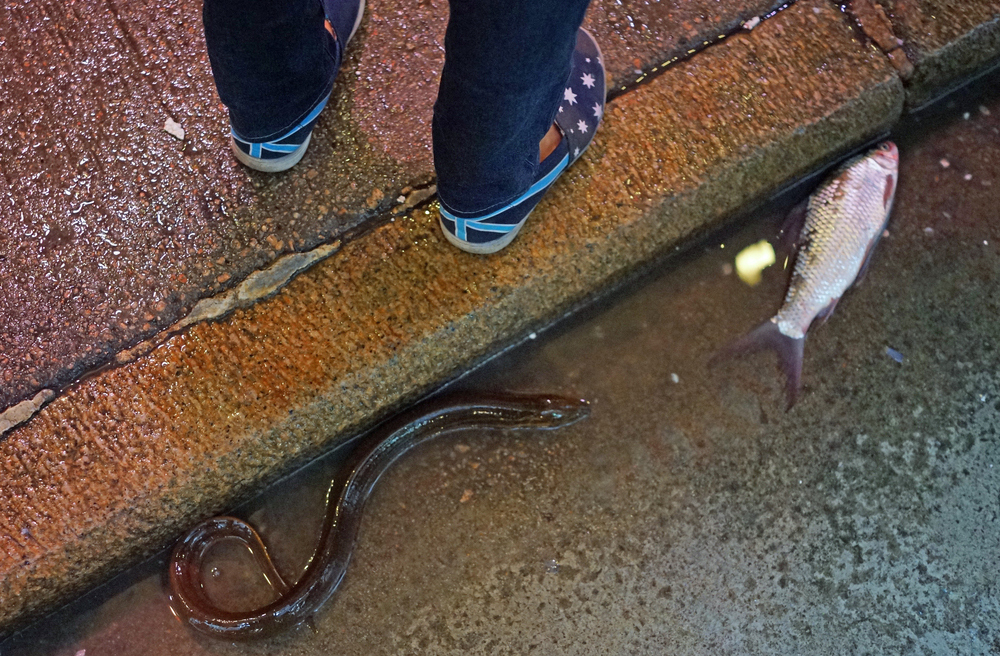 An eel and a fish made a forlorn bid for freedom at Wanchai wet market -  Go here for all my images of the Wanchai wet market
