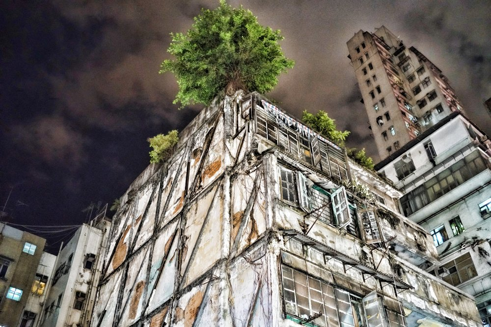 I have always been fascinated by this old tree that is holding this dodgy building together.. it is at the Yaumatei end of Temple Street.