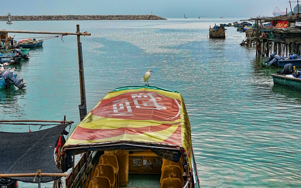 I am not very good at getting or framing great shots, I am just never in the right place at the right time but I am pretty happy that I got the bird shot on the boat.   Go here for all of my Tai O Fishing Village images
