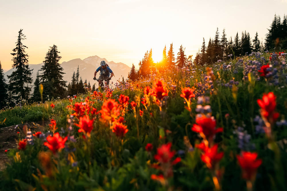 Steve Critchlow cashes in on gorgeous wildflower laden singletrack high above Revelstoke, BC