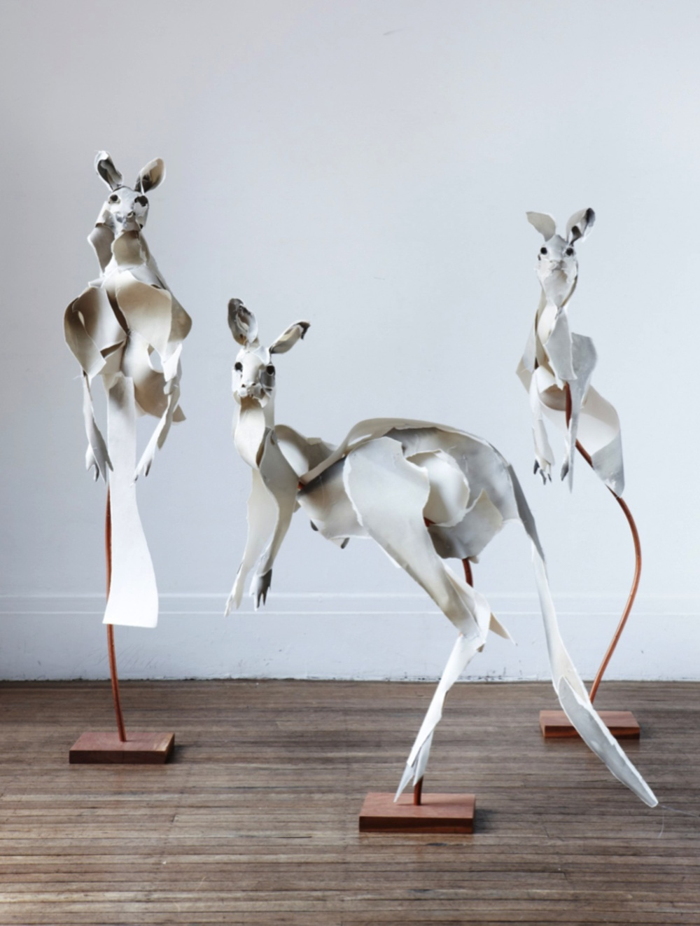 Roos 2013 by  Anna-Wili Highfield