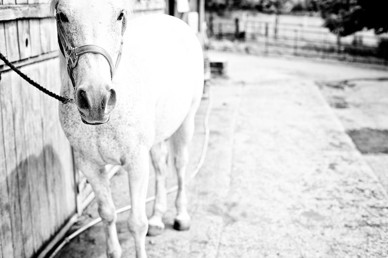Animals 025.jpg