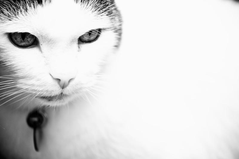 Animals 030.jpg