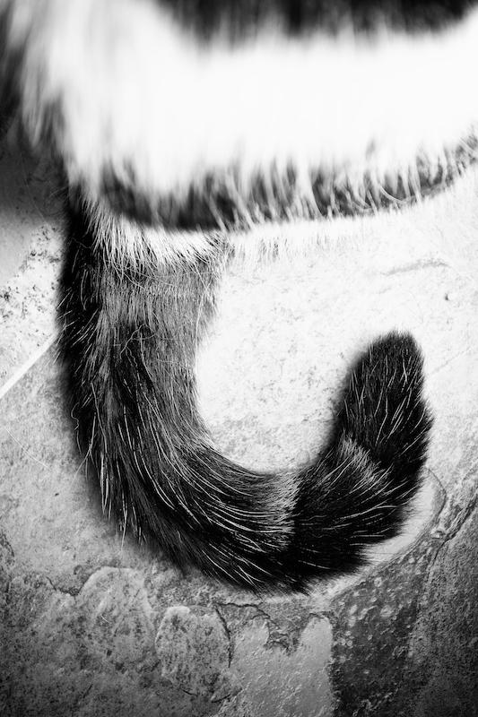 Animals 031.jpg