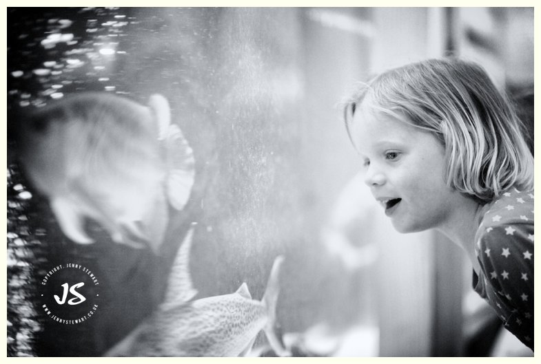 child gazing with wonder at fish in huge fish tank