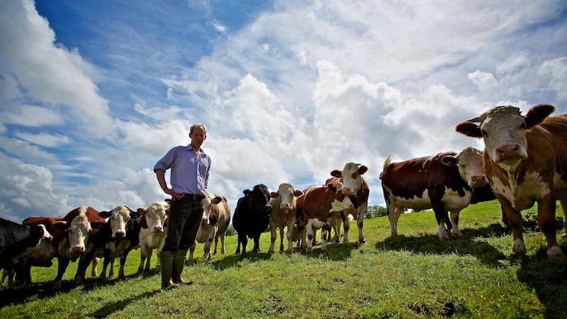 commercial portrait of James MacCurrach and his Love My Cow cows