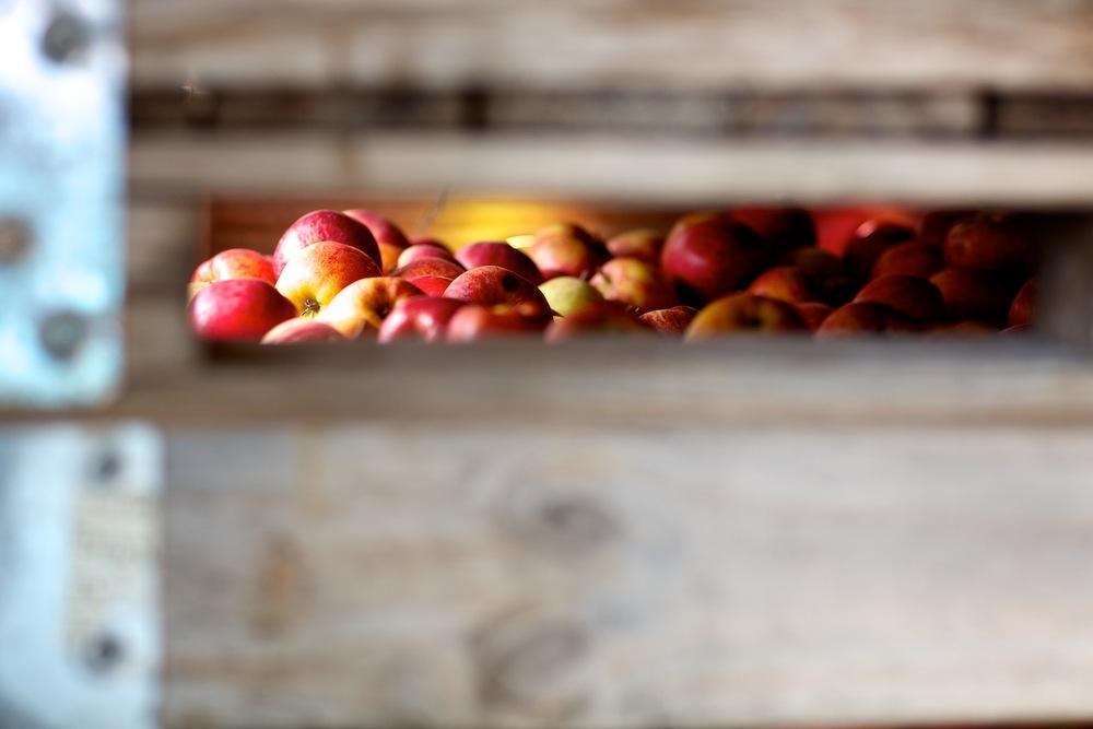 Apples 018.jpg