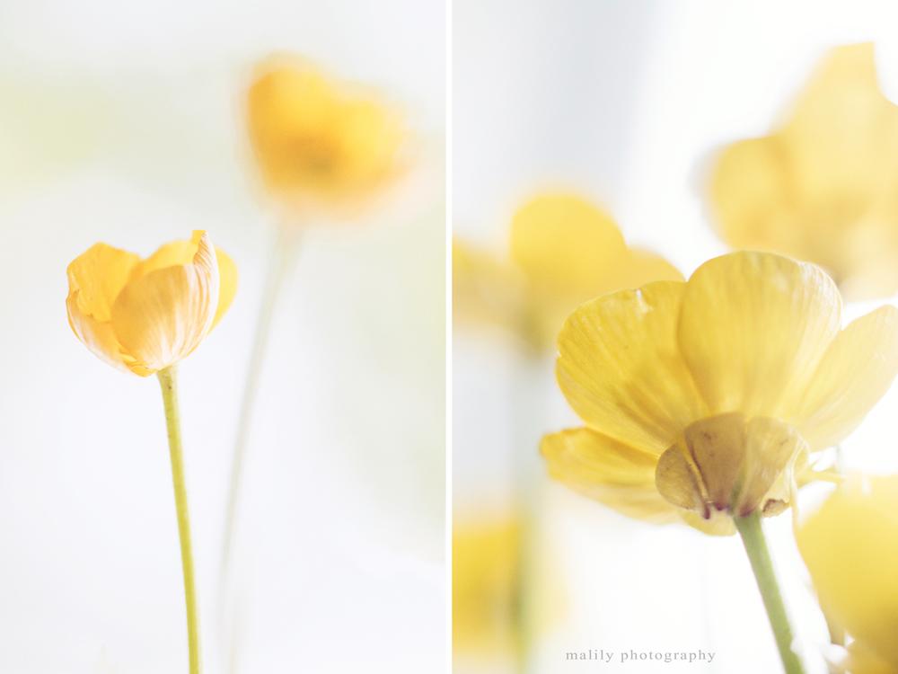 sflowers2.jpg