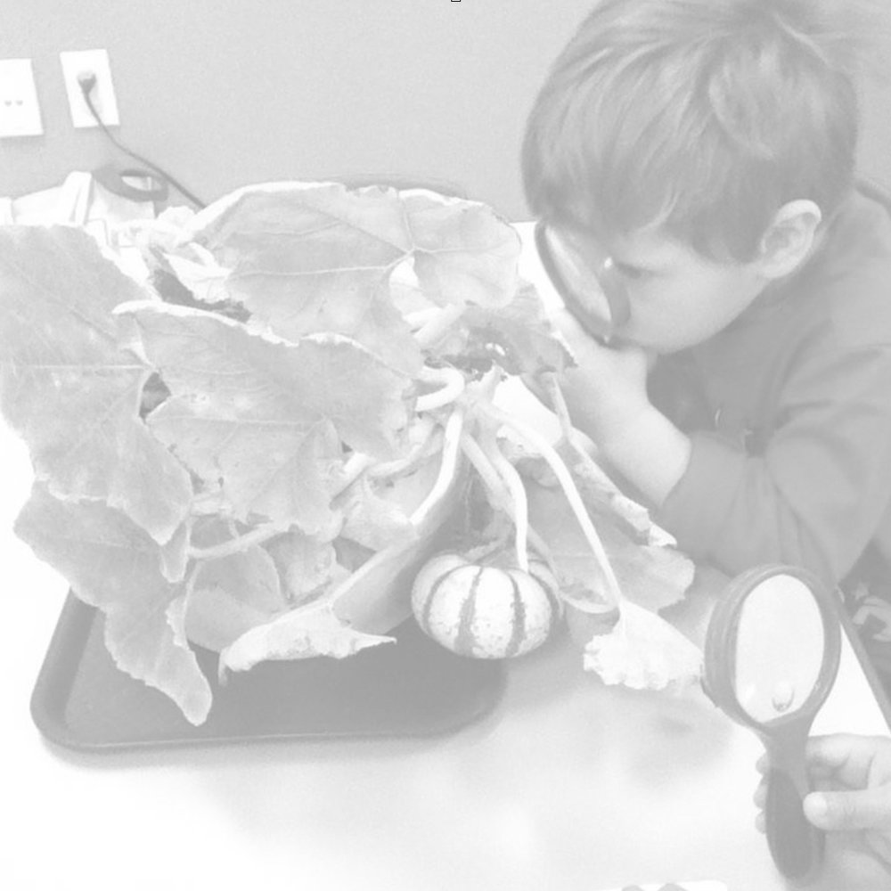Programa preescolar -
