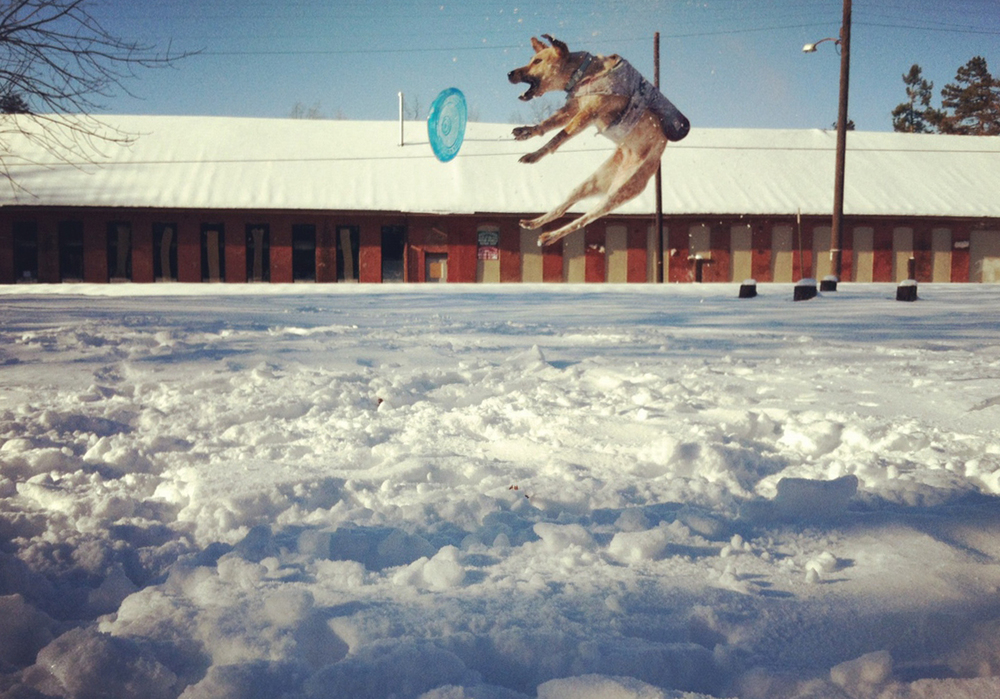 jumping_snow_dog.jpg