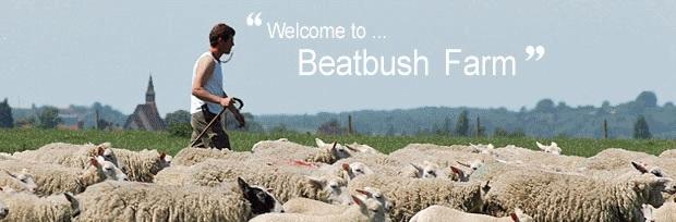 beatbush lamb pic.jpg