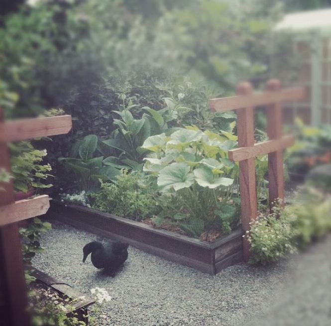late_july_garden.jpg