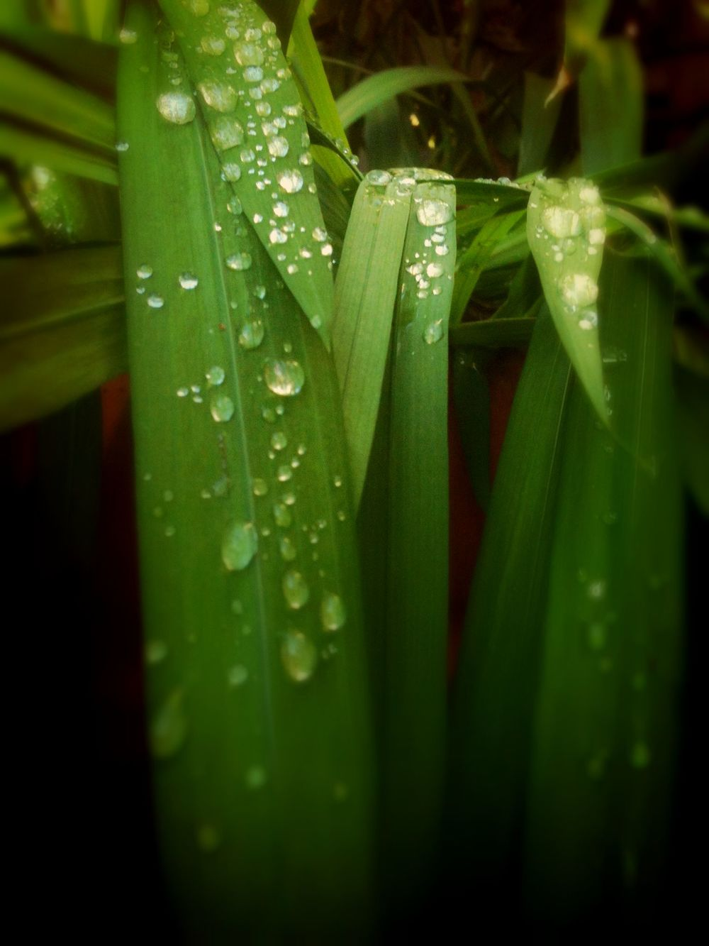 droplets_lucifers.jpg