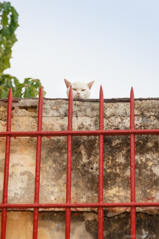 angry-cat-rabat-malta-martin-drake-photography