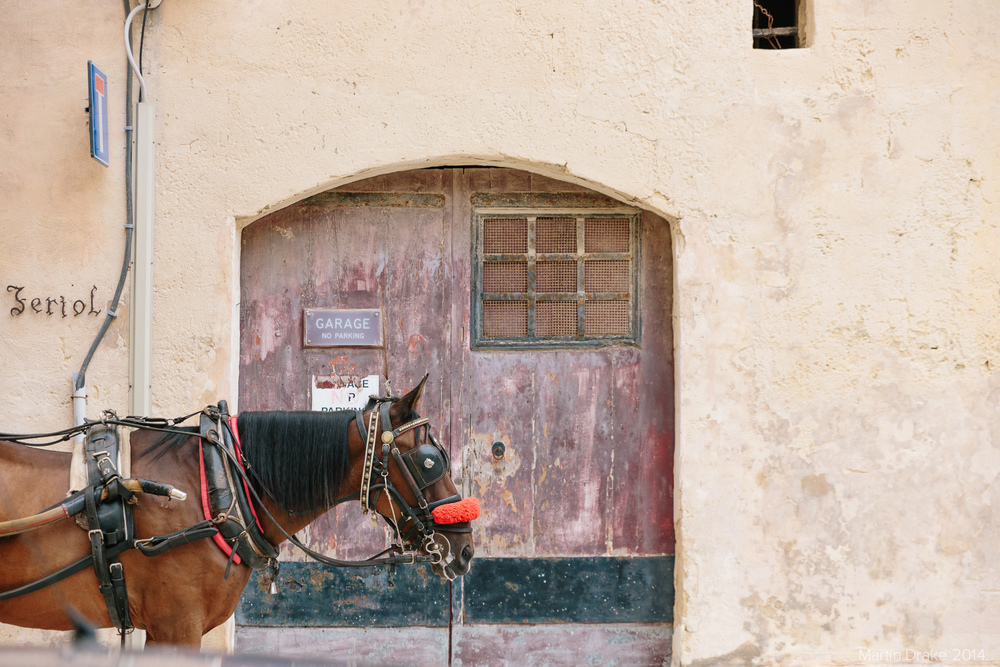 horse-mdina-malta-martin-drake-photography