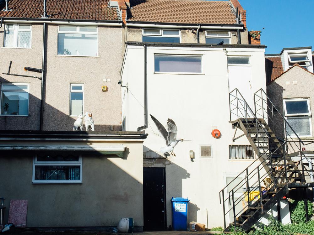 Martin-Drake-Street-Photo-Bristol-May-Seagul-0001.jpg