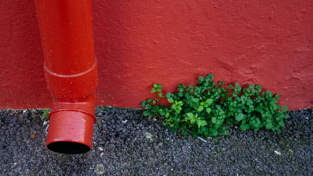 Street-Photo-Nov-0015.jpg