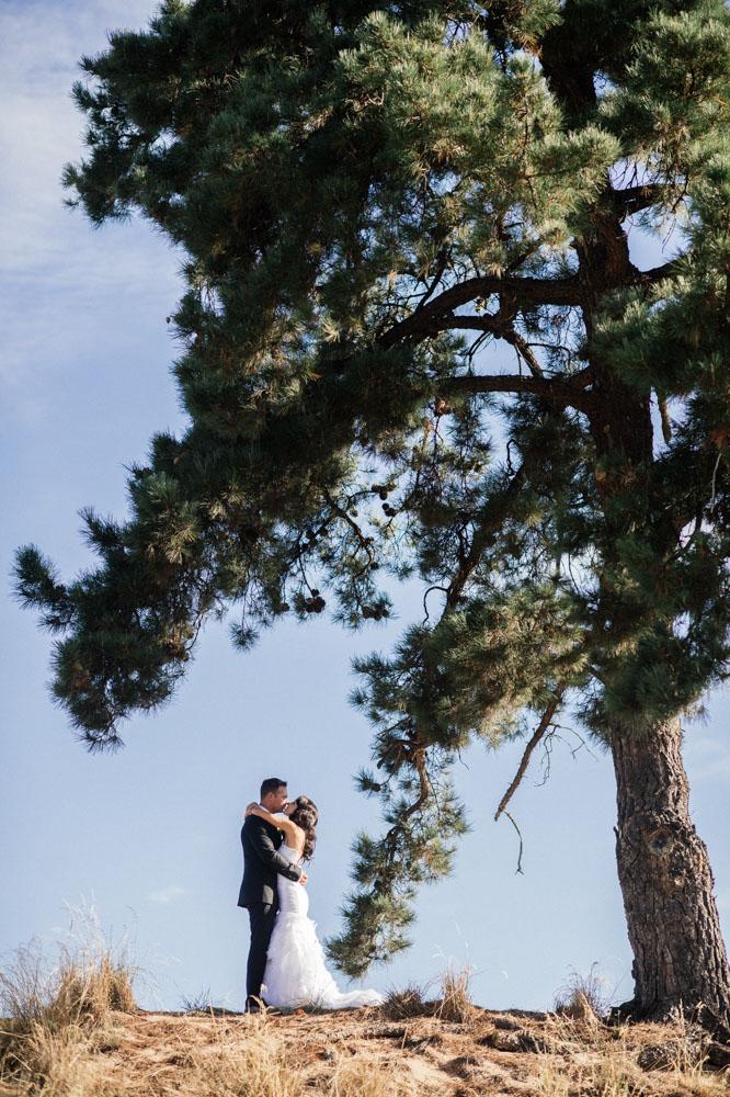 tree-portrait.jpg