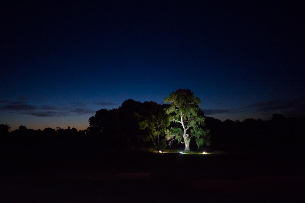 golf-course-trees.jpg