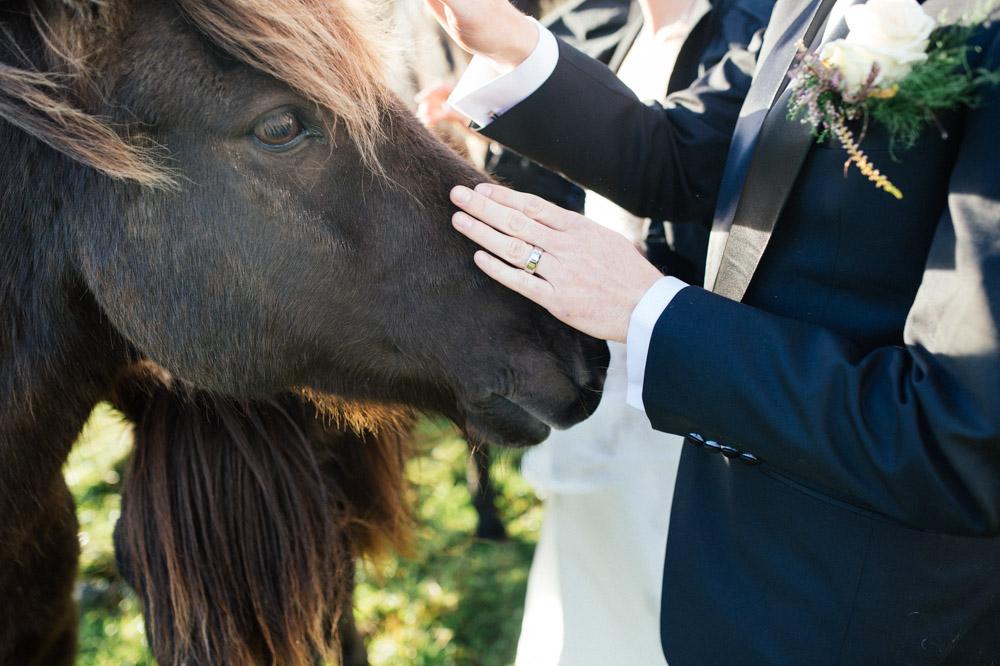 pat-horse.jpg