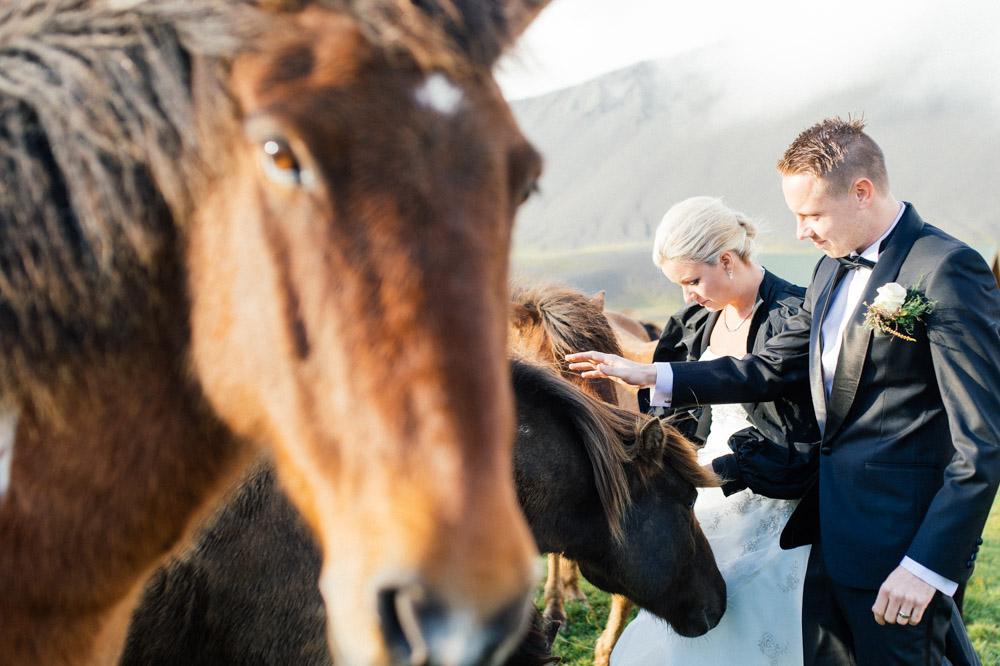 horse-head-wedded-couple.jpg