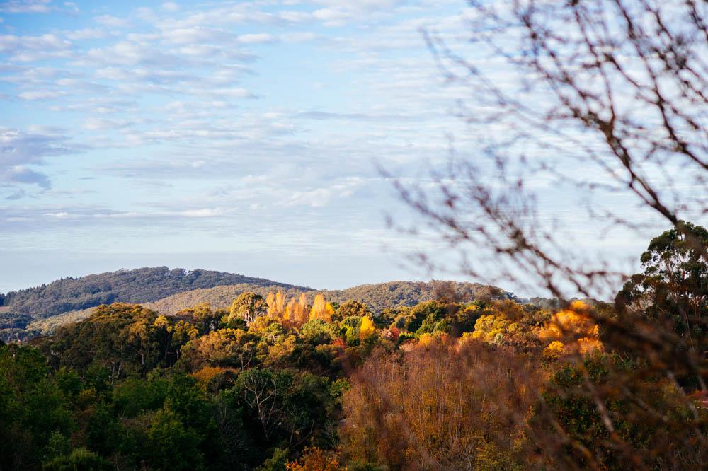 fall-landscape.jpg