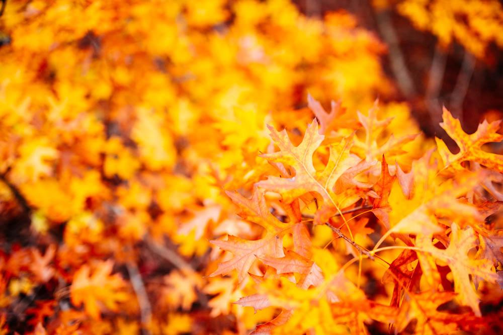 orange-fall-leaves.jpg