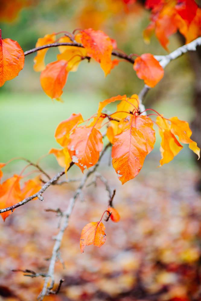 red-autumn-leaves.jpg